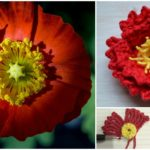 How To CROCHET Island POPPY