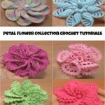 Petal Flowers Collection